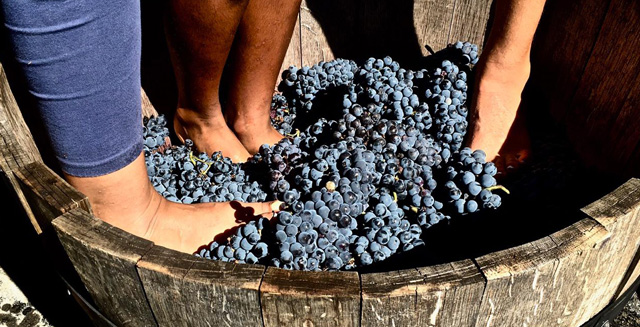 HARVEST EXPERIENCE AT PERINET